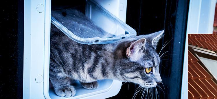Cat Flap Fitter Wivenhoe