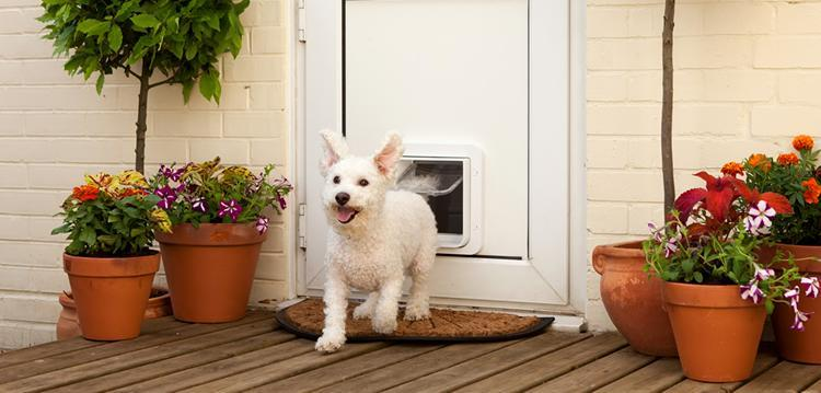 Cat Flap Installers Wivenhoe