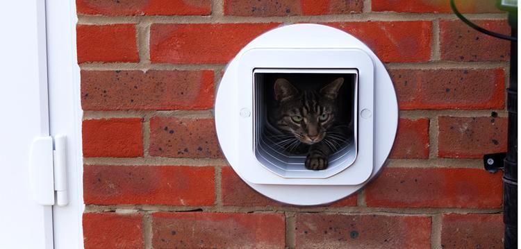 Cat Flap Glass Door Wivenhoe