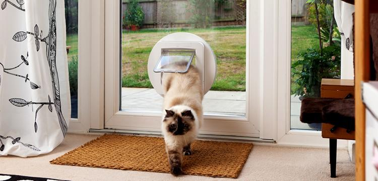 deter cats from peeing in yard