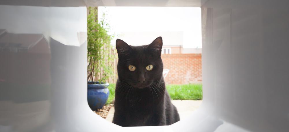 Greenfield Cat Rescue